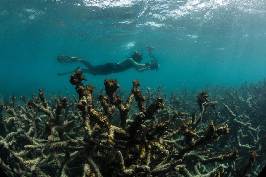 The Ocean Agency/XL Catlin Seaview Survey/AP |Död korall vid Lizard Island på Stora barriärrevet, fotograferad 2016.