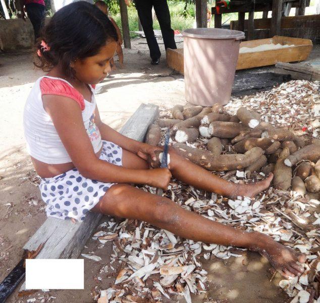 Fabiana Frayssinet/TT En liten flicka skalar kassava som ska bli mjöl i delstaten Pará i nordvästra Brasilien.