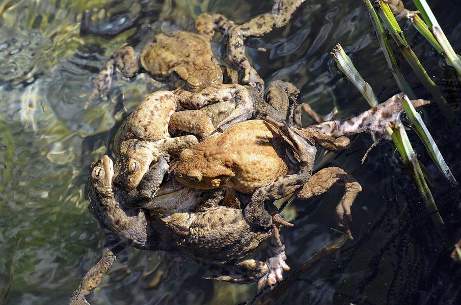 Kerstin Joensson/TT Ett paddmöte kan också vara ett alternativ till Små grodorna.