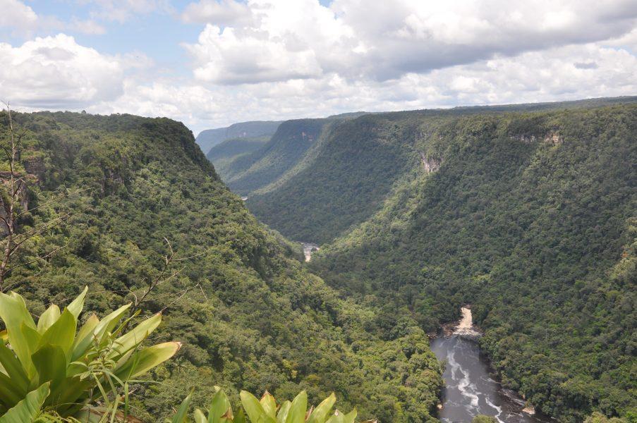Desmond Brown/IPS |Närmare 80 procent av Guyanas skogar, närmare 15 miljoner hektar, har fått stå orörda.