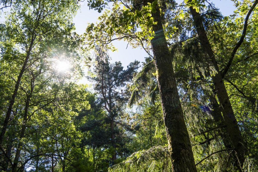 Lars Pehrson/ TT | Ett skogsområde i Stockholms län som bjuder på naturupplevelser och friskvård.