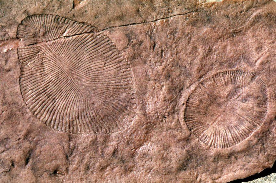 De äldsta kända komplexa flercelliga djuren uppstod för 600 miljoner år sedan.