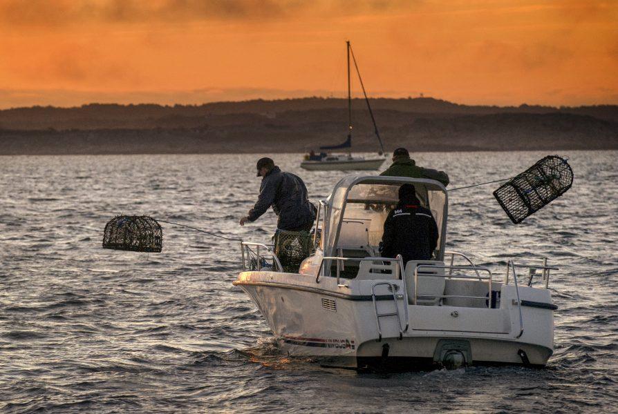 Björn Larsson Rosvall/TT | Borttappade hummertinor i haven är ett stort problem som gör att många djur svälter ihjäl.