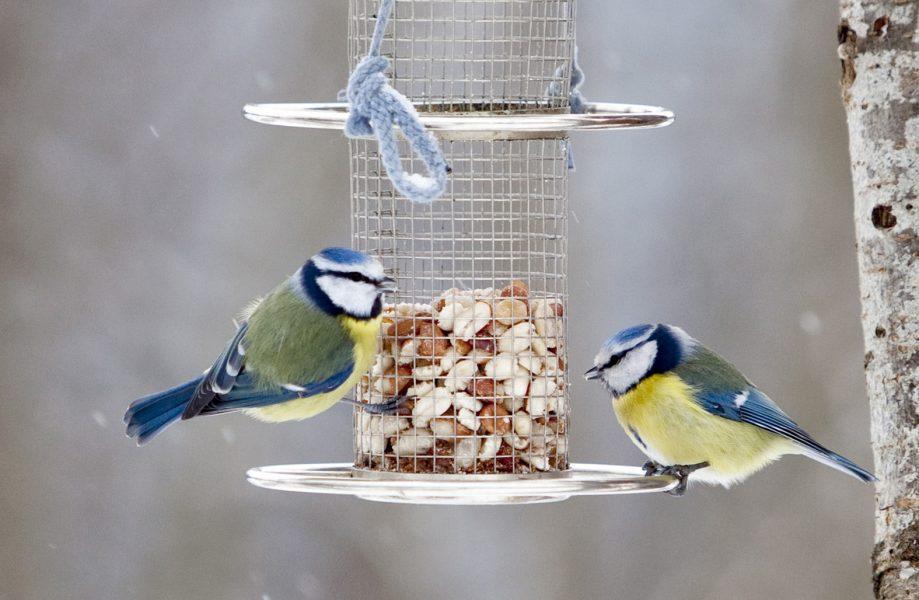 Rekordmånga kan ha räknat vinterfåglarna i år, enligt preliminära siffror.