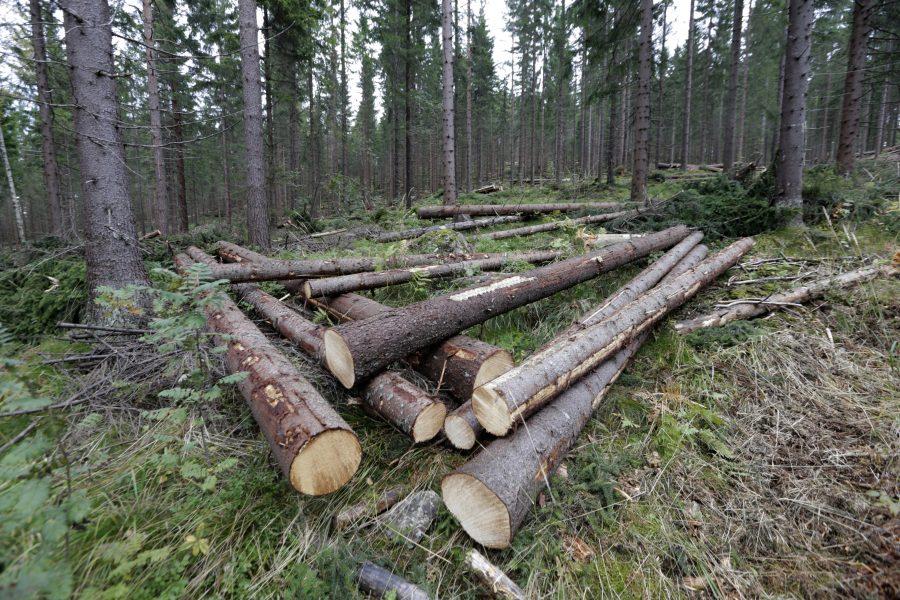 Att stimulera till mer kalhyggesfritt skogsbruk är en av de föreslagna åtgärderna för att förbättra miljömålsarbetet.