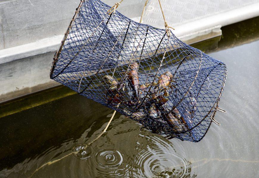 Christine Olsson/TTLänsstyrelsen i Jönköping ska använda sig av drönare för att få stopp på tjuvfisket.