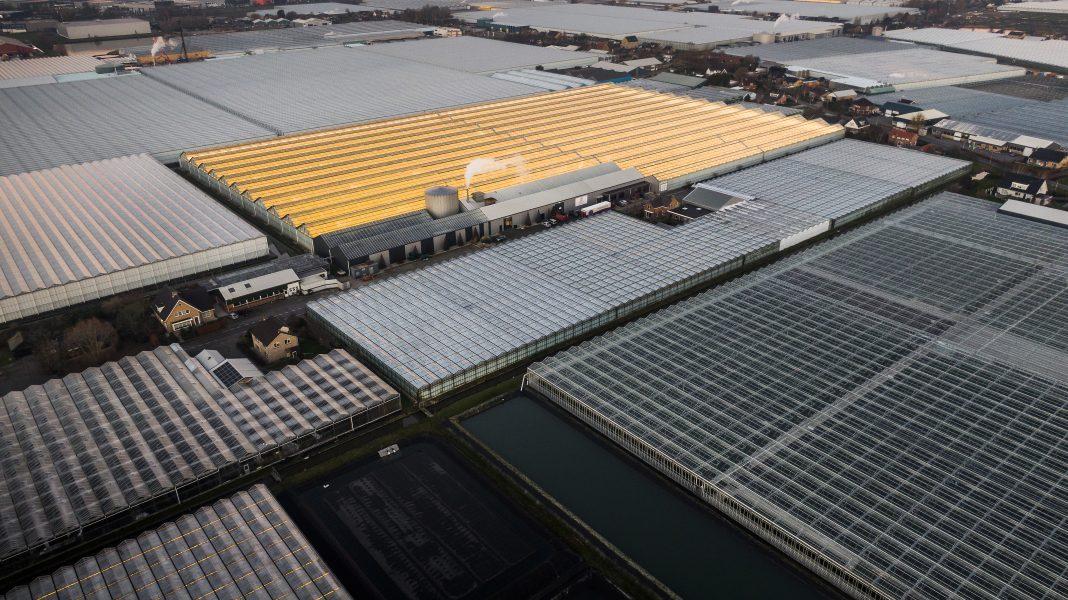 I Nederländerna finns en stor andel av EU:s växthus.