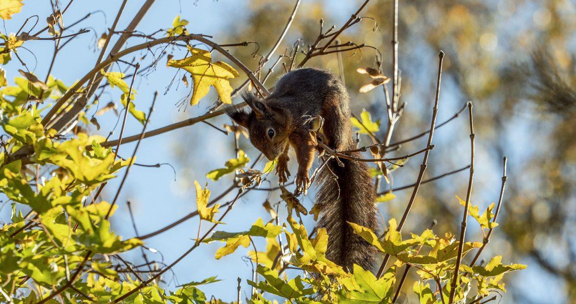 Tänk på hur jaktpolitiken kan påverka dina ickemänskliga vänner, manar veckans debattörer.