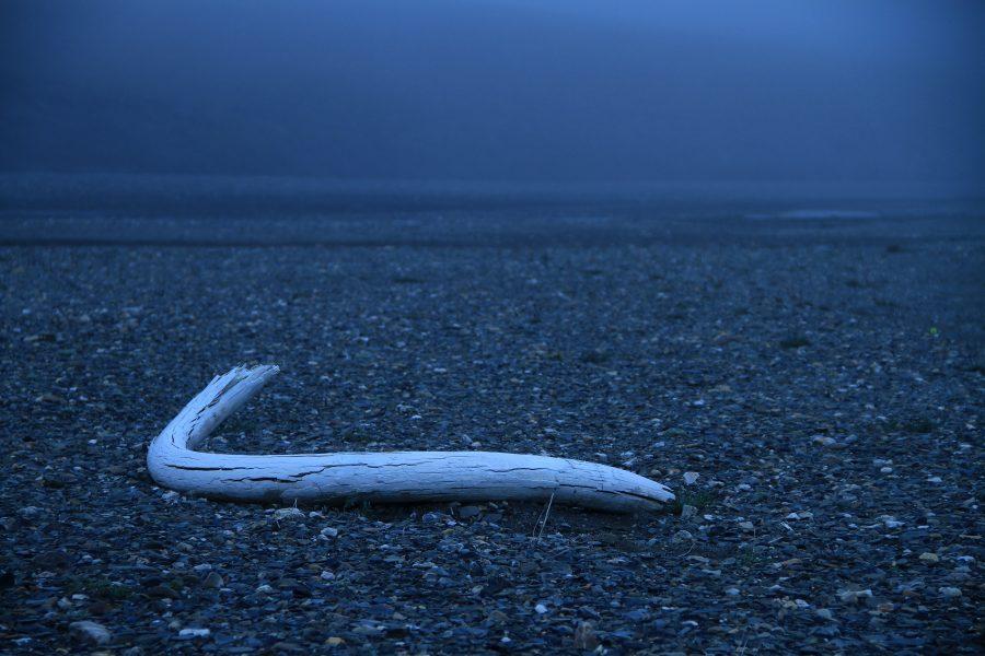 Den allra sista mammuten dog för cirka 4000 år sedan på Wrangels ö, där man fortfarande kan hitta rester från det håriga djuret.