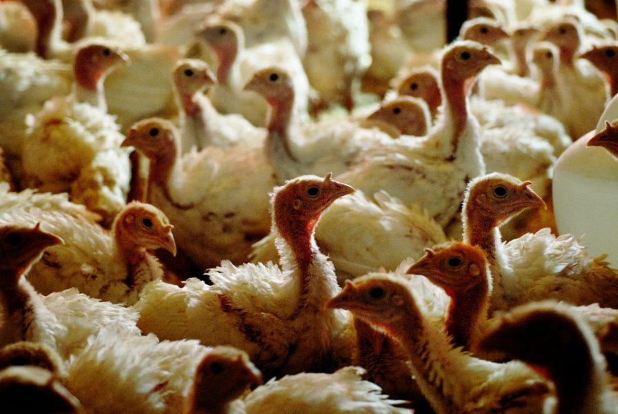 Skadorna som djurindustrin åsamkar miljön och hälsan kostar mer än vad den bidrar till den amerikanska ekonomin.