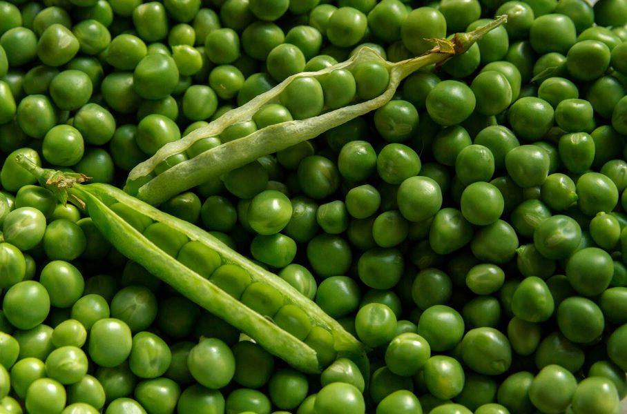 Gröna ärtor är fortfarande den vanligaste svenska baljväxten för humankonsumtion, men de har minskat sedan Findus flyttade utomlands.