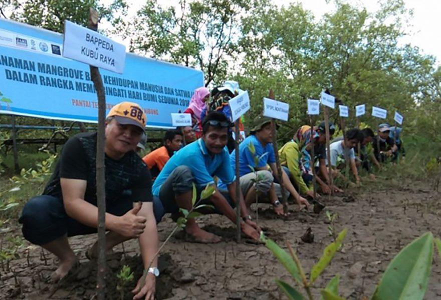 Byledaren Svarif Ibrahim (andra från vänster) i fiskebyn Sungai Nibung vid plantering av mangroveträd i västra Kalimantan på Borneo.
