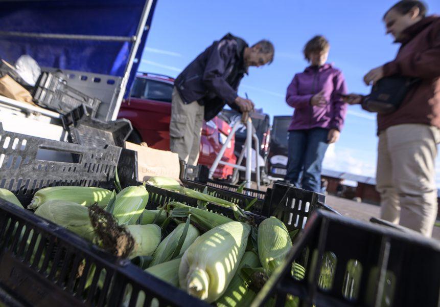 Ekonomi för det allmänna bästa i liten skala: medlemmar i en rekoring handlar grönsaker i Lund och får lokalt producerad mat samtidigt som de lokala producenterna får lättare att hitta sina kunder.