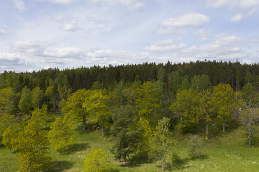 Träds rörelser kan varna för brand, enligt ny forskning.