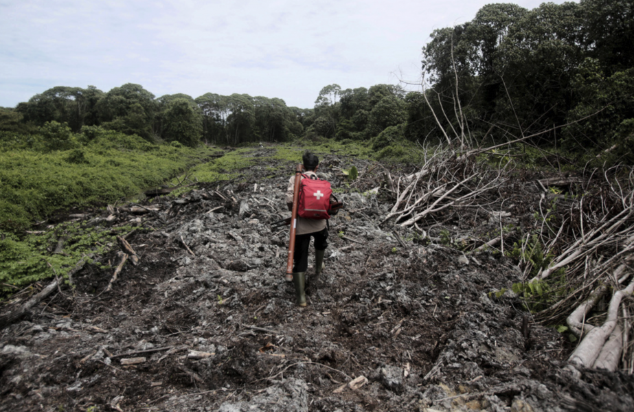 Nedhuggen skog i närheten av palmoljeplantage i Acehprovinsen i Indonesien.