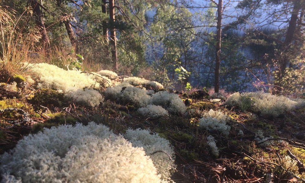 Den mångfald som gör skogens ekosystem så unikt vackert är hotad, skriver Max Whitman.