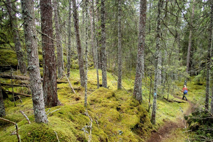 Om skog ska få användas som ett sätt att bokföra utsläppsminskningar, är en av skiljelinjerna mellan EU:parlamentet och EU:kommissionen.