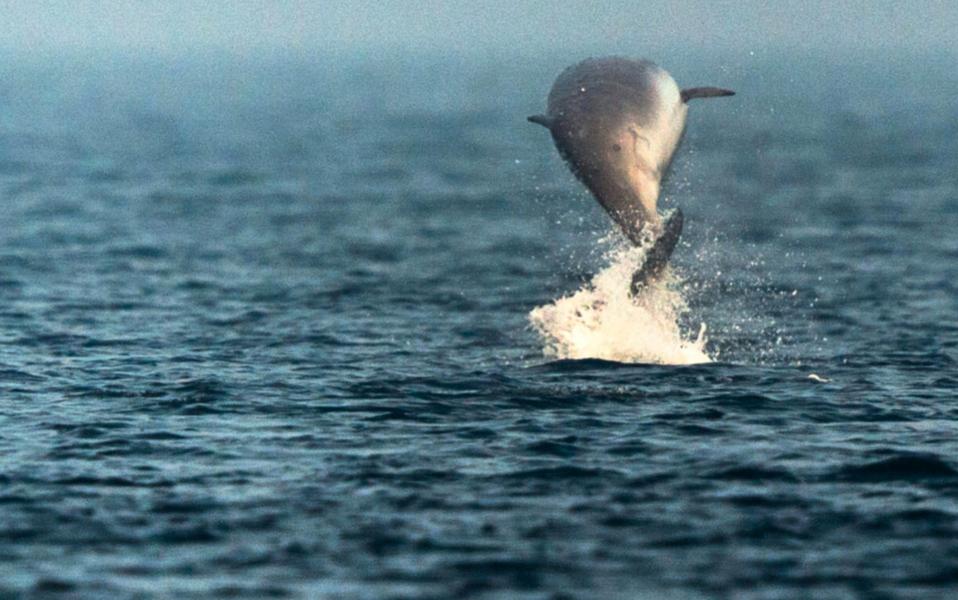 En ny art näbbvalar kan ha upptäckts utanför Mexiko.