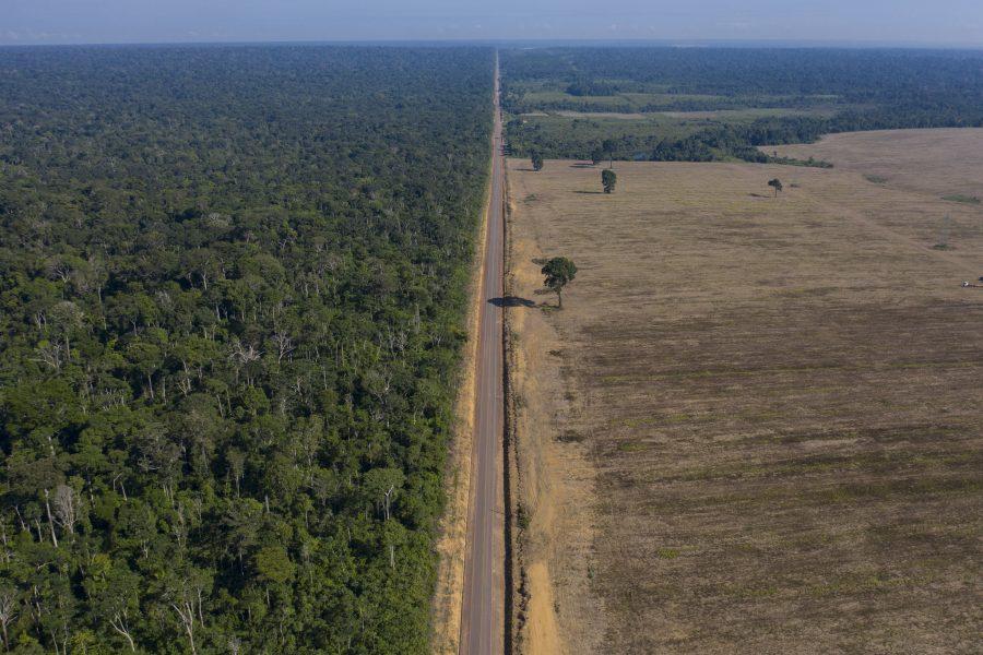 Regnskogar är bland de mest hotade livsmiljöerna på jorden på grund av den omfattande avskogningen.