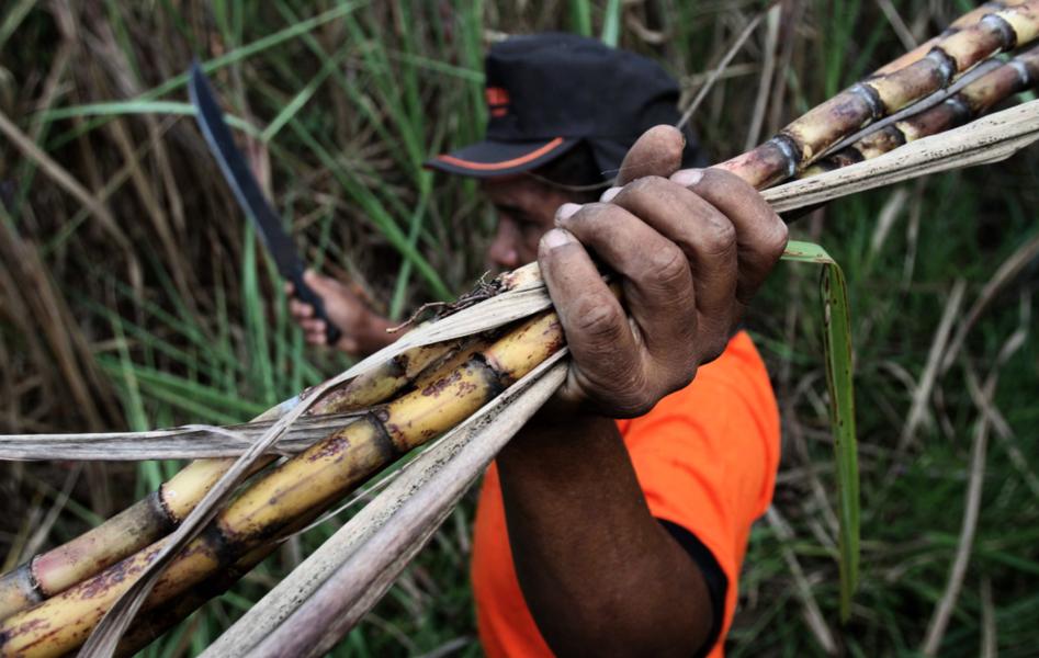 Brasilien granskar arbetsförhållande för att undvika slavliknande metoder.