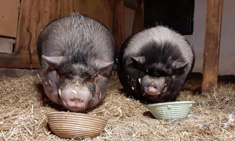 Samtliga djur på Gotlands djurfristad kommer att omhändertas efter ett nytt oanmält besök på gården, meddelar länsstyrelsen.