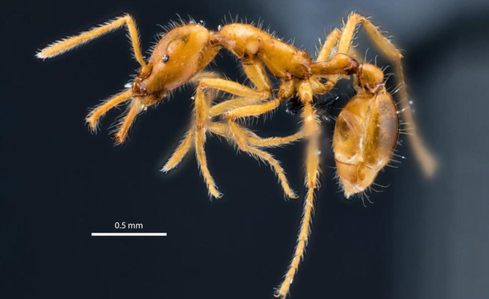 För första gången har en art uppkallad efter en person fått ett könsneutralt namn.