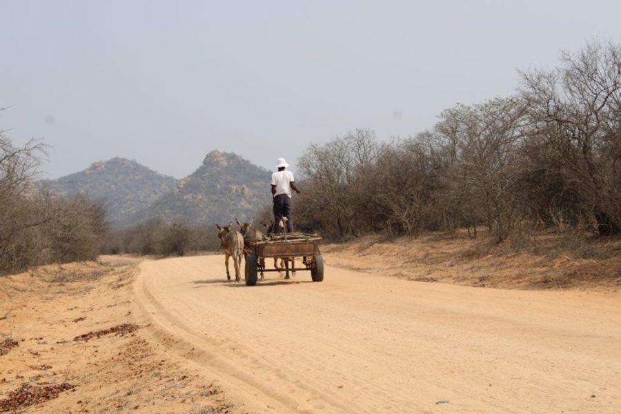 Den träkol som säljs i städerna har tidigare varit illegalt importerad från Zimbabwes grannländer.