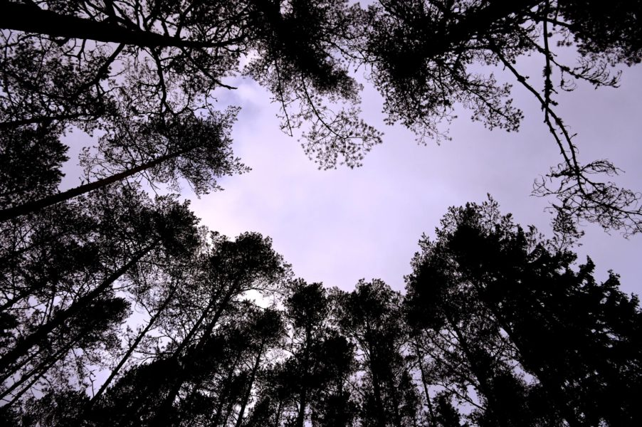 Artskyddsutredningen ska lösa konflikter mellan bland annat skogsindustrins intressen och EU:s direktiv för naturskydd.