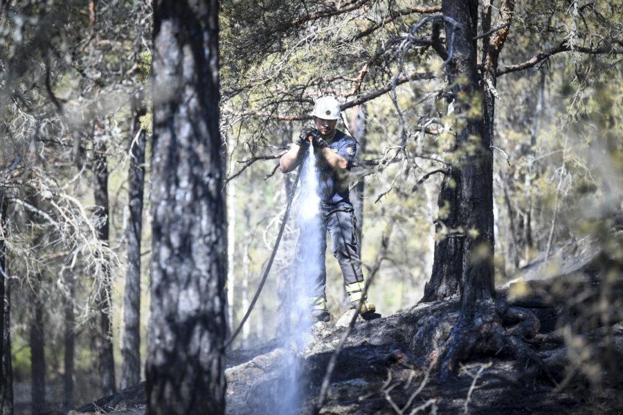 Det har brunnit på flera håll i skogarna i Västernorrland under söndagskvällen och -natten.
