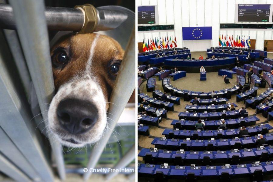 EU-parlamentet röstade nyligen igenom en resolution om att EU bör ta fram en handlingsplan med konkreta mål och tidsramar för att fasa ut alla djurförsök.
