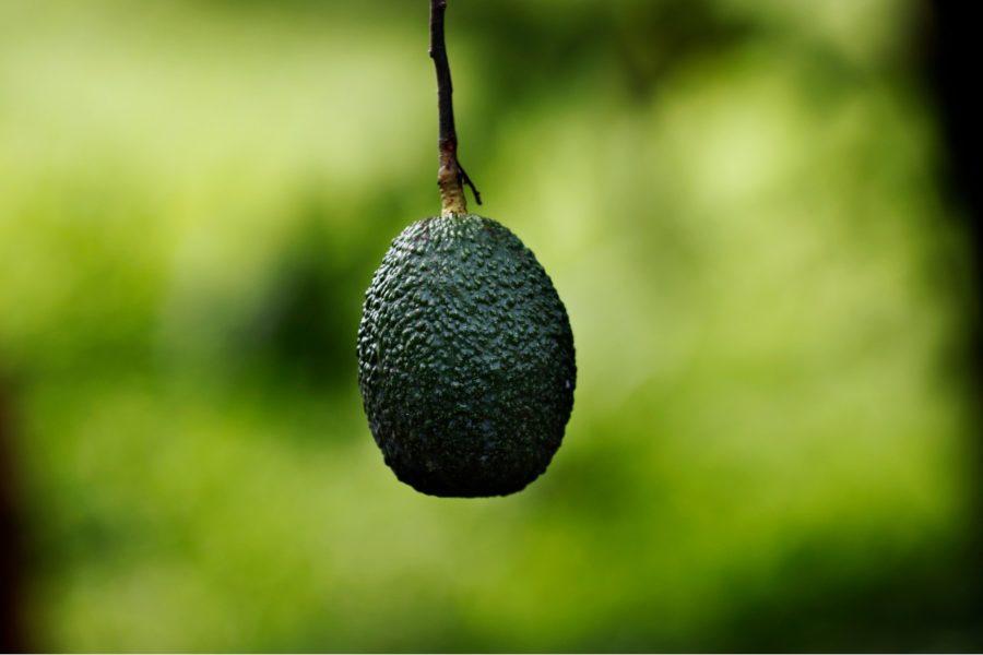 Vilda släktingar till några av våra vanligaste grödor hotas av utrotning, något som i ett framtida varmare klimat kan få förödande följder för vår matsäkerhet, enligt Internationella naturvårdsunionen (IUCN).
