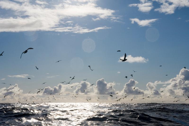 2,9 till 5 miljoner sjöfåglar använder sig av det havsområde som nu föreslås bli ett marint skyddat område (Naces mpa) i norra Atlanten, fördelat på 22 arter, varav flera är hotade.