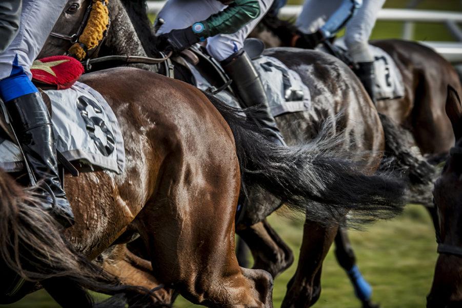 Det bör inte vara tillåtet att piska hästar under kapplöpning, anser PETA.