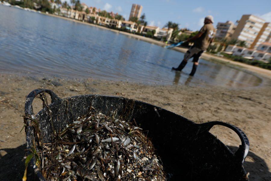 Tusentals döda fiskar spolades upp på ytan i Mar Menor sjön i Spanien i sommar.