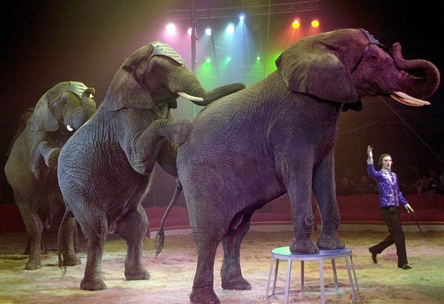 En miljon människor har skrivit under ett upprop som kräver att det införs ett förbud i hela EU mot att använda vilda djur på cirkus.