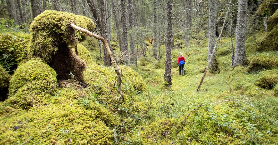 Är det verkligen orimligt, som miljöminister Per Bolund säger, att följa EU:s förslag om mer kolinlagring i svensk skog? Debattörerna från Klimatalliansen tvivlar.