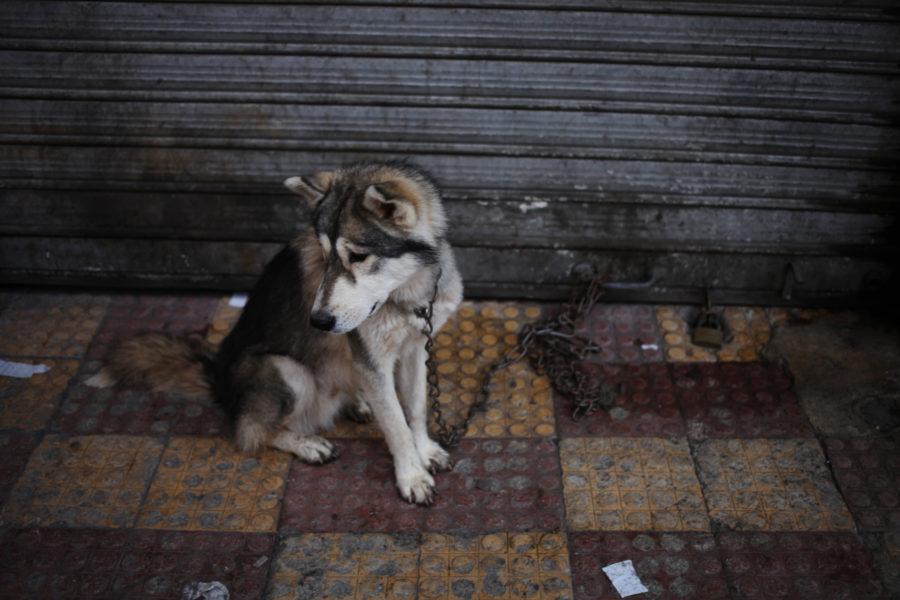 I dag ger djurplågeri bara straff i upp till två års fängelse, hur grovt brottet än är.