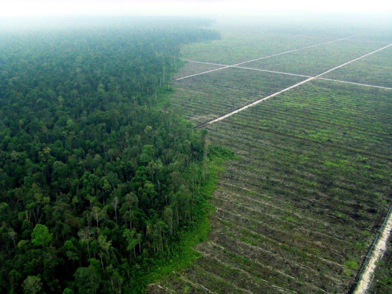 Foto taget av Greenpeace paramotorflygare på Sumatra i Indonesien 2007 under ett tidigare projekt i syfte att dokumentera skogs- och torvbränder.